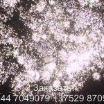 Мечта (FP-B340) 6492 салют