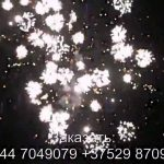 Стрелы Амура (FP-B350) 6724 салют
